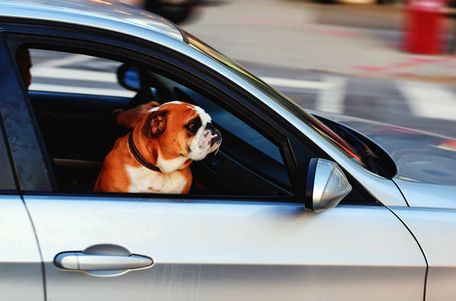 10 best cars for pet owners
