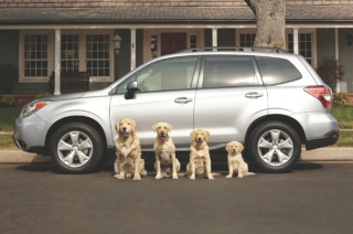 WATCH: Adorable dog ads by Subaru will make you go aww