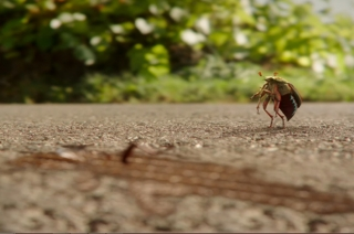 Opel bug commercial