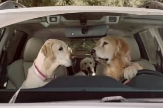 Subaru Dog Tested