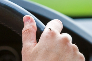 How to remove mosquitoes in your car